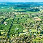 Avocado farm
