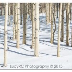 USA - Aspens + Snow