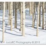 USA - Aspens + Snow