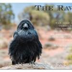 USA - Raven